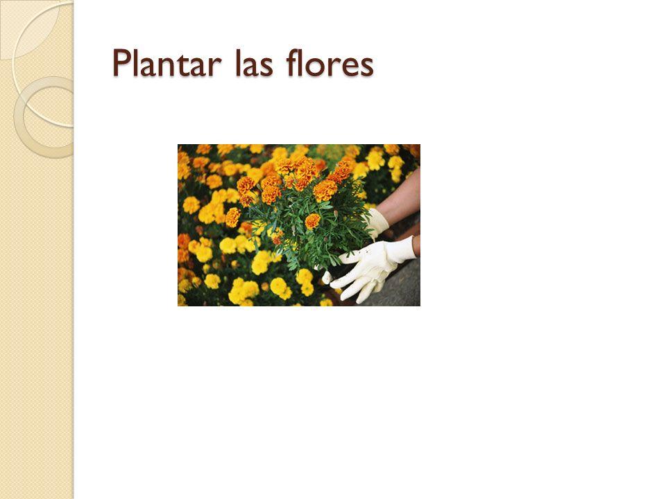 Plantar las flores