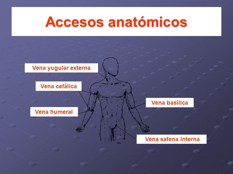Accesos anatómicos Vena yugular externa Vena cefálica Vena basílica