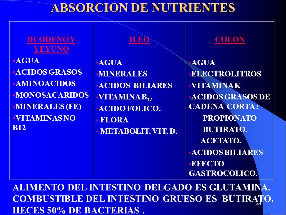 ABSORCION DE NUTRIENTES
