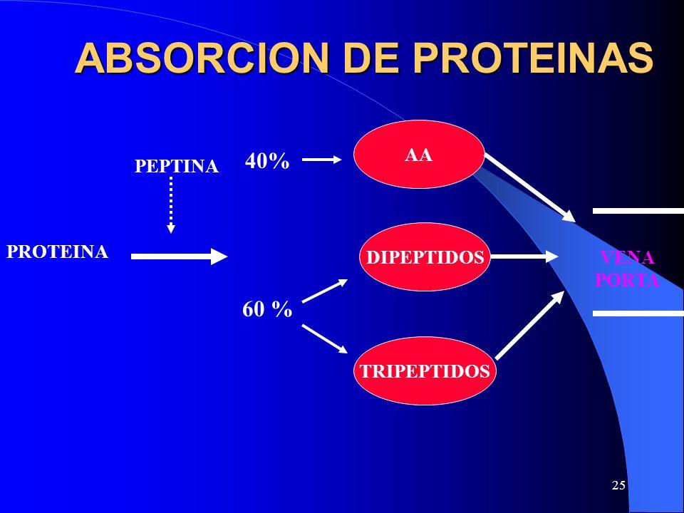 ABSORCION DE PROTEINAS