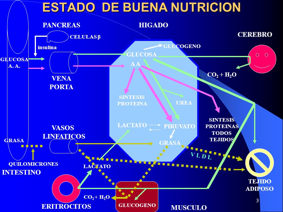 ESTADO DE BUENA NUTRICION