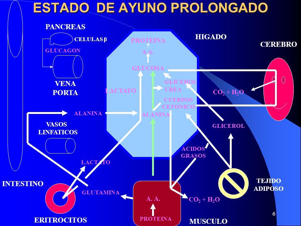 ESTADO DE AYUNO PROLONGADO