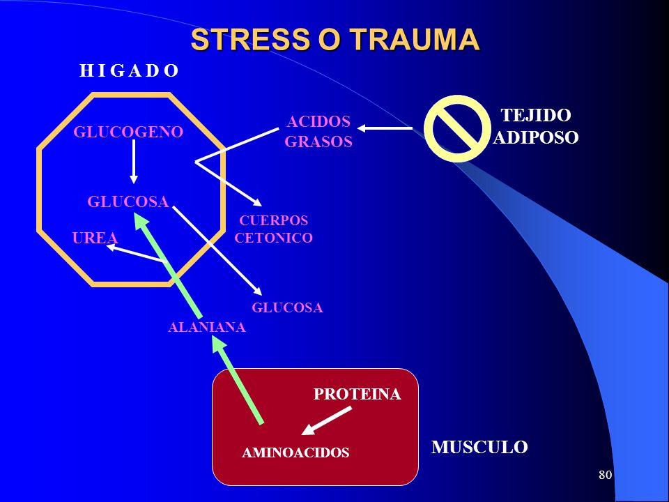 STRESS O TRAUMA H I G A D O TEJIDO ADIPOSO MUSCULO ACIDOS GLUCOGENO