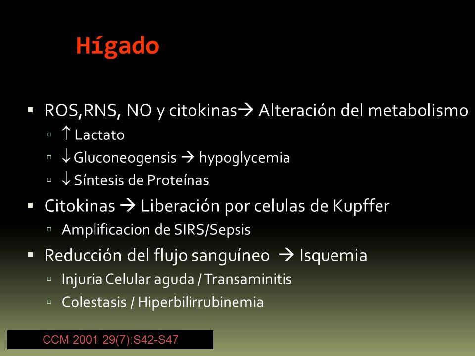 Hígado ROS,RNS, NO y citokinas Alteración del metabolismo