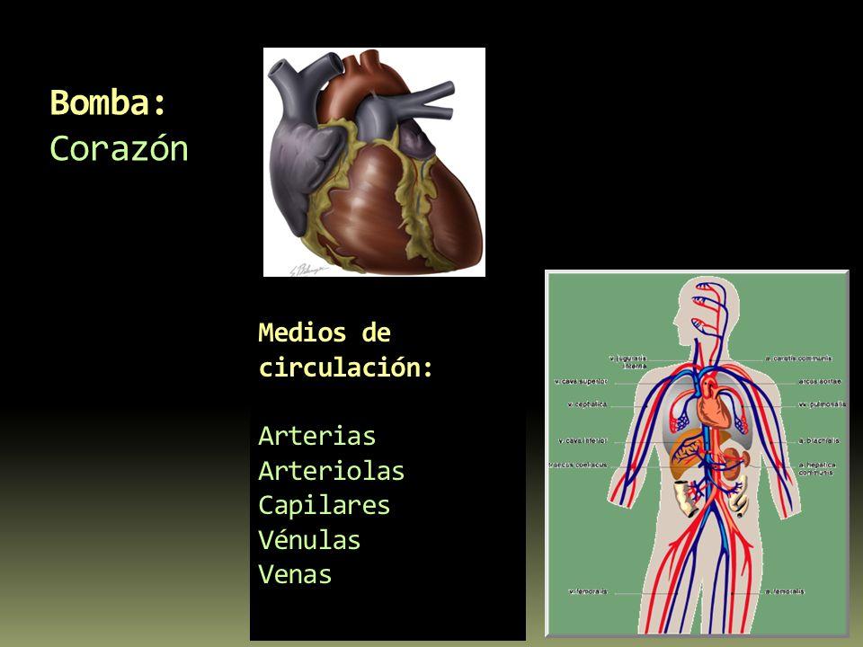 Medios de circulación: Arterias Arteriolas Capilares Vénulas Venas