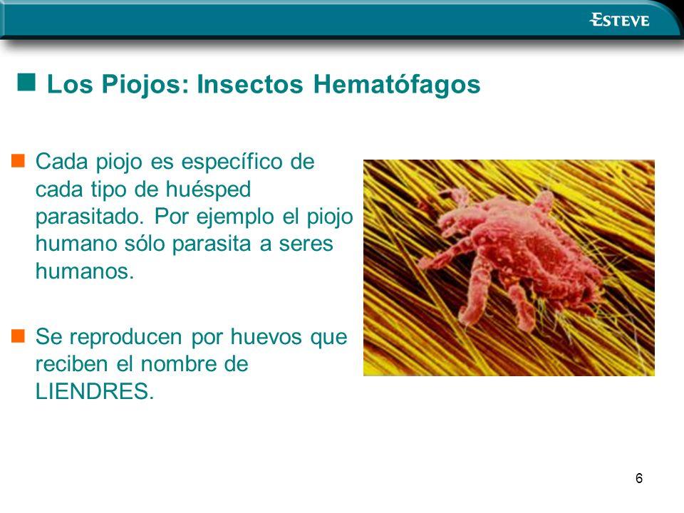 Los Piojos: Insectos Hematófagos