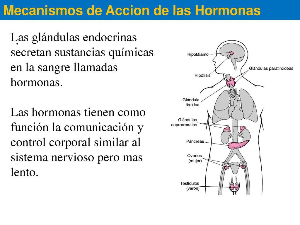 Perfecto Una Introducción A La Anatomía Y La Fisiología De Paquetes ...