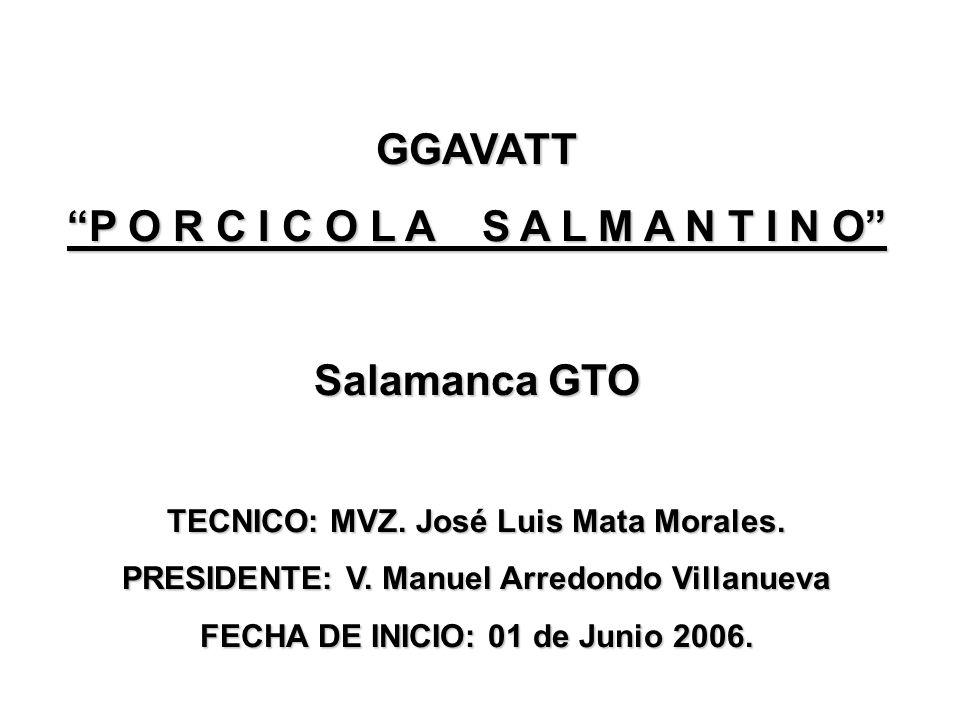GGAVATT P O R C I C O L A S A L M A N T I N O Salamanca GTO