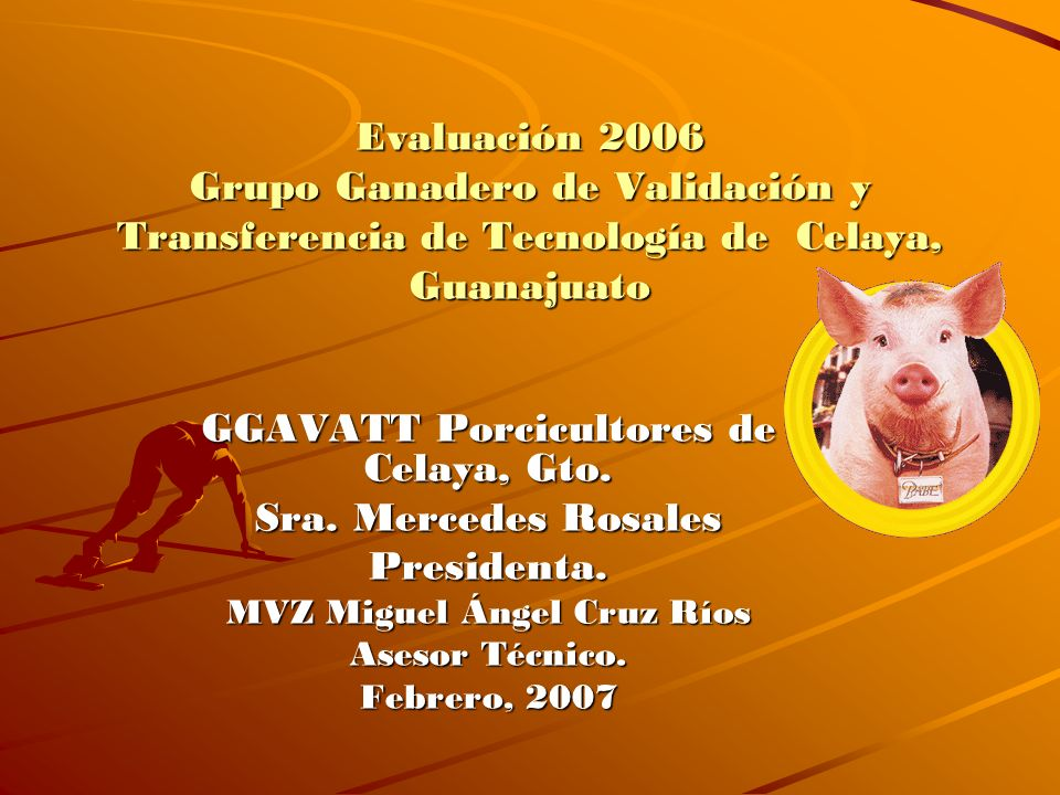 GGAVATT Porcicultores de Celaya, Gto. MVZ Miguel Ángel Cruz Ríos