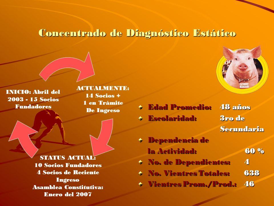Concentrado de Diagnóstico Estático
