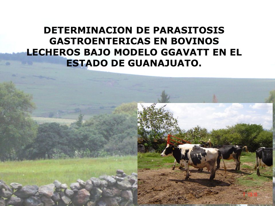 DETERMINACION DE PARASITOSIS GASTROENTERICAS EN BOVINOS LECHEROS BAJO MODELO GGAVATT EN EL ESTADO DE GUANAJUATO.