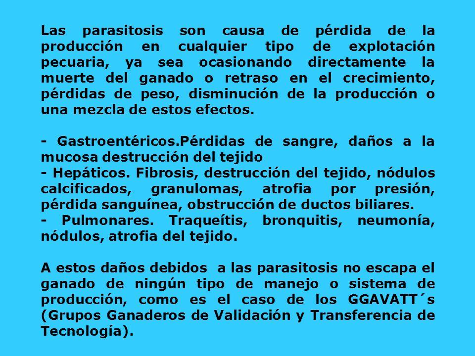 Las parasitosis son causa de pérdida de la producción en cualquier tipo de explotación pecuaria, ya sea ocasionando directamente la muerte del ganado o retraso en el crecimiento, pérdidas de peso, disminución de la producción o una mezcla de estos efectos.