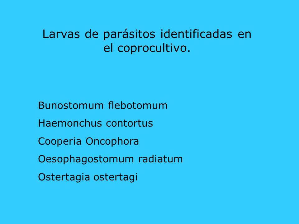 Larvas de parásitos identificadas en el coprocultivo.