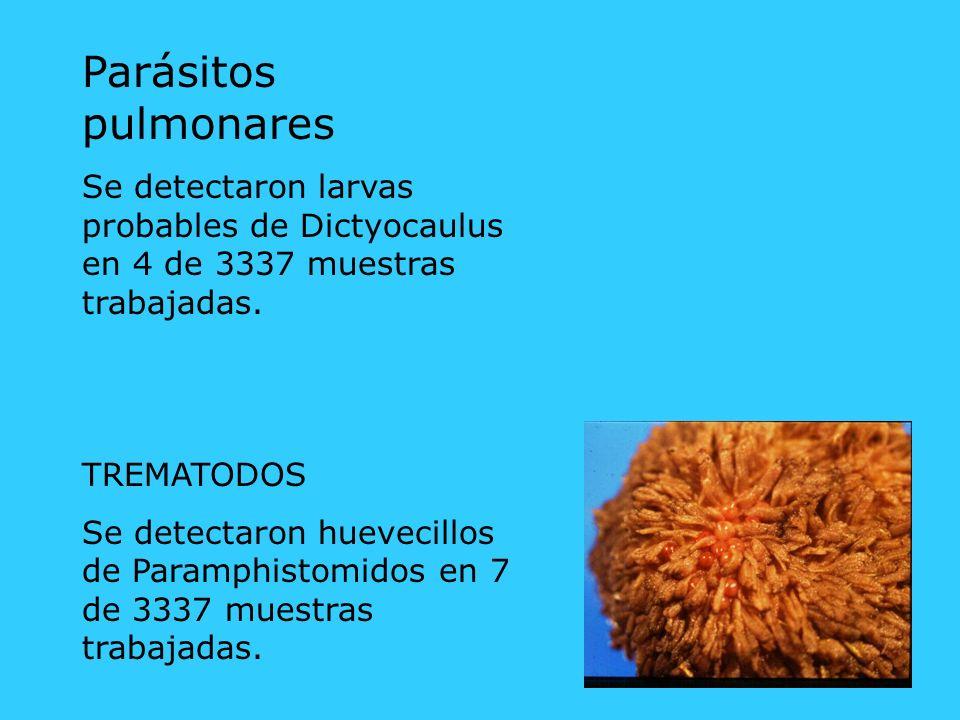 Parásitos pulmonares Se detectaron larvas probables de Dictyocaulus en 4 de 3337 muestras trabajadas.