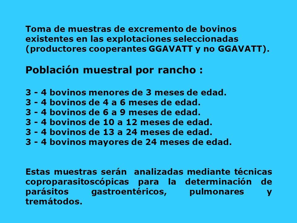 Población muestral por rancho :