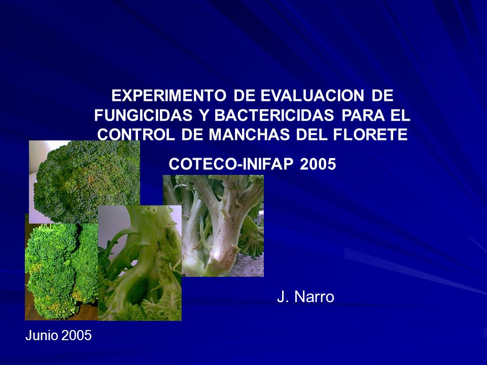 EXPERIMENTO DE EVALUACION DE FUNGICIDAS Y BACTERICIDAS PARA EL CONTROL DE MANCHAS DEL FLORETE
