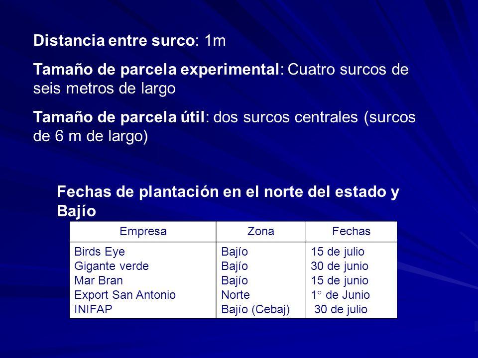 Distancia entre surco: 1m