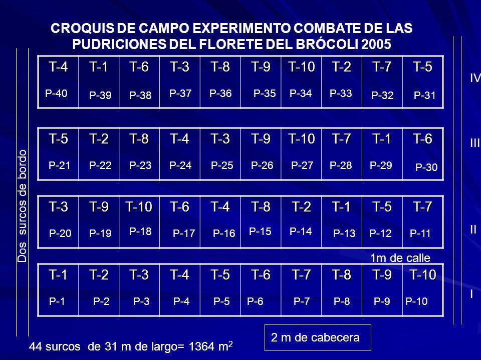 CROQUIS DE CAMPO EXPERIMENTO COMBATE DE LAS PUDRICIONES DEL FLORETE DEL BRÓCOLI 2005