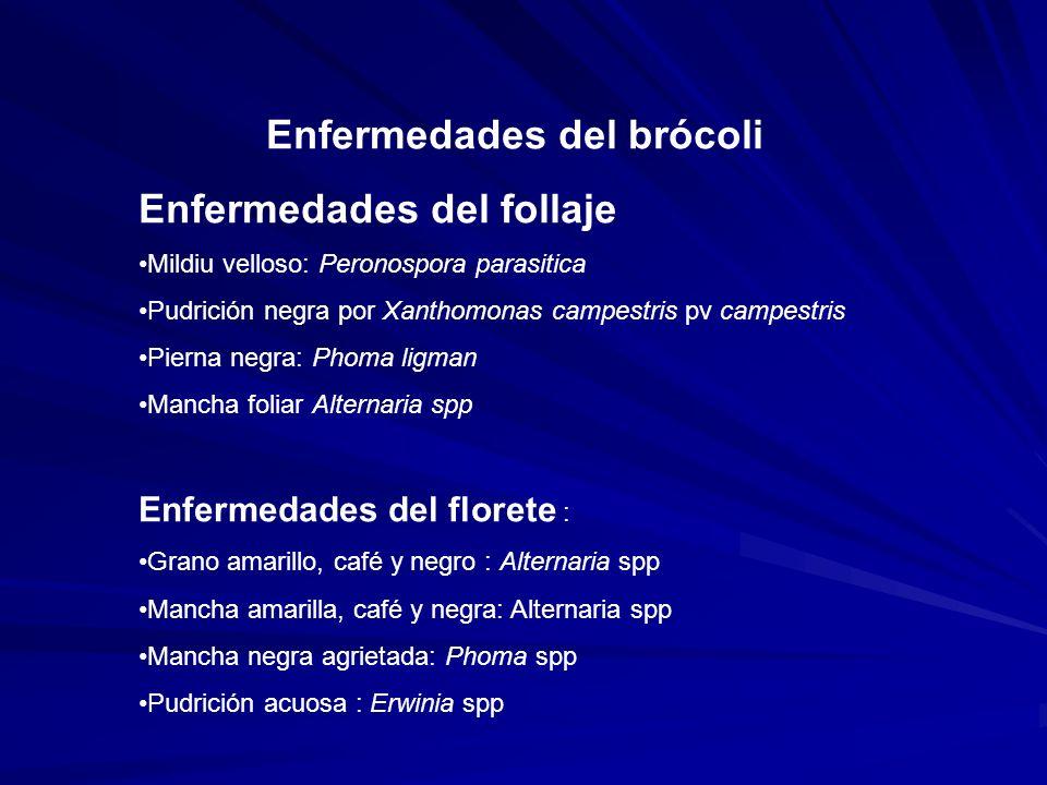 Enfermedades del brócoli