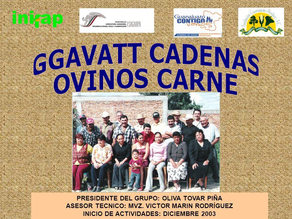 GGAVATT CADENAS OVINOS CARNE