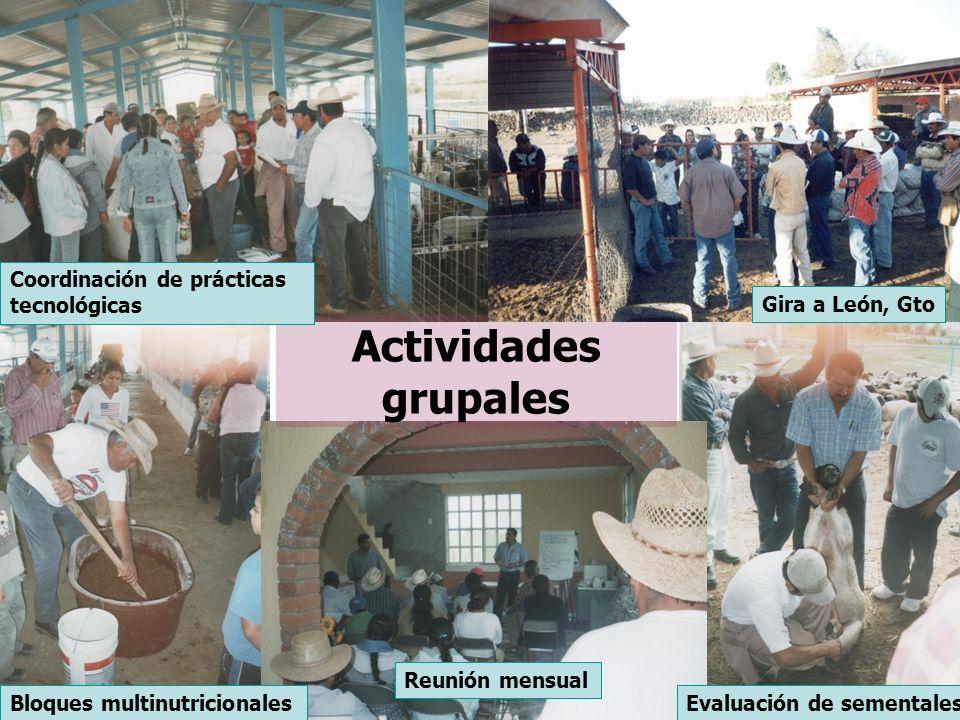 Actividades grupales Coordinación de prácticas tecnológicas