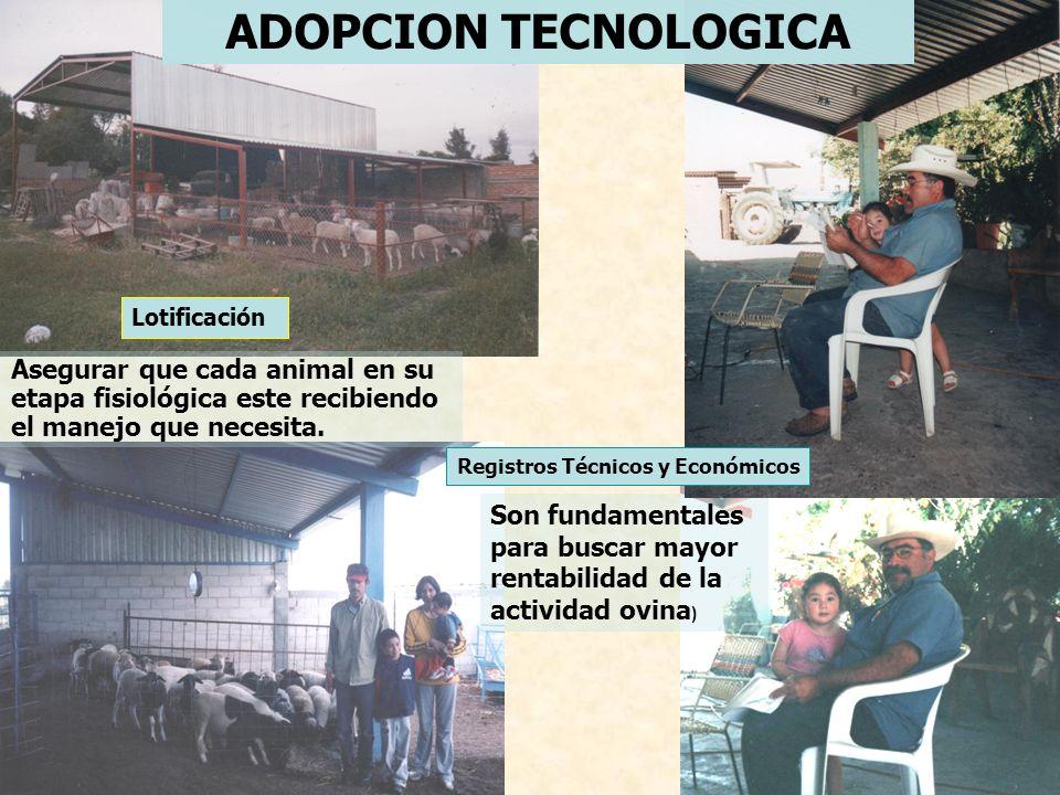ADOPCION TECNOLOGICA Lotificación. Asegurar que cada animal en su etapa fisiológica este recibiendo el manejo que necesita.