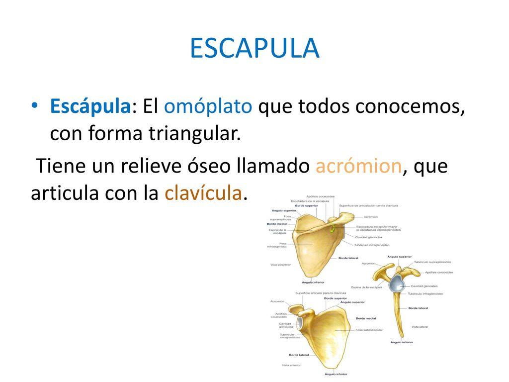 Dorable Anatomía Y Fisiología Humana Por Marieb Elaine Elaboración ...