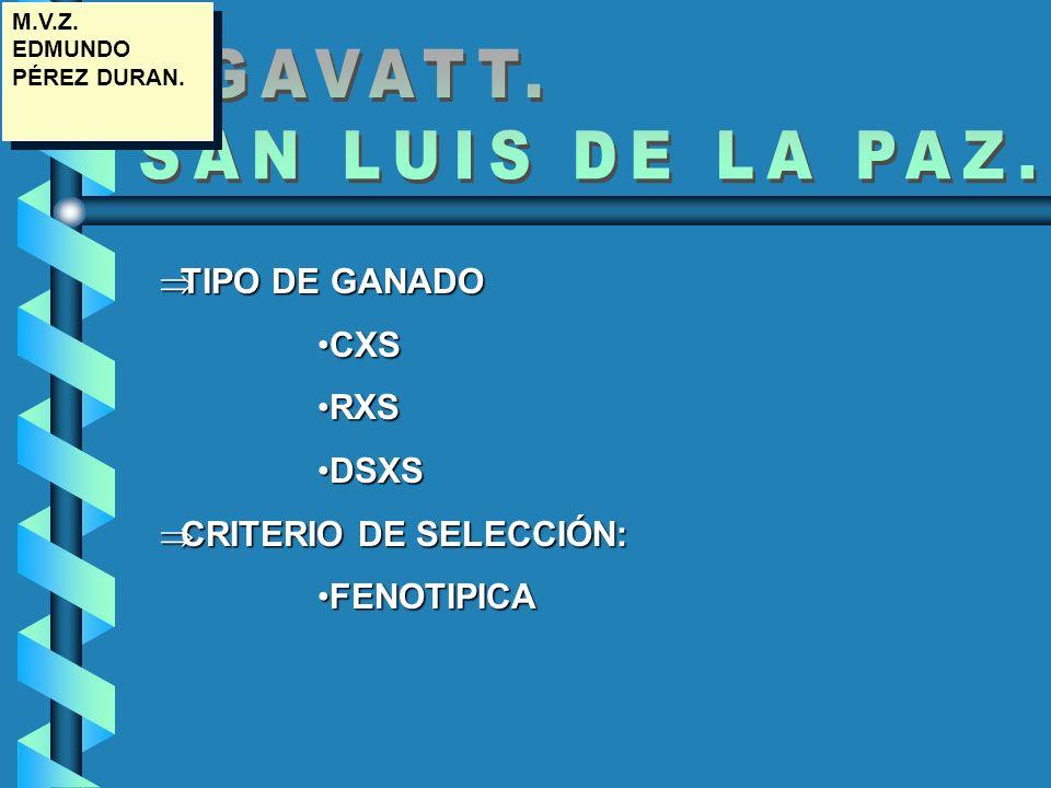 GGAVATT. SAN LUIS DE LA PAZ. TIPO DE GANADO CXS RXS DSXS