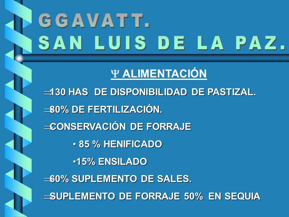 GGAVATT. SAN LUIS DE LA PAZ.  ALIMENTACIÓN