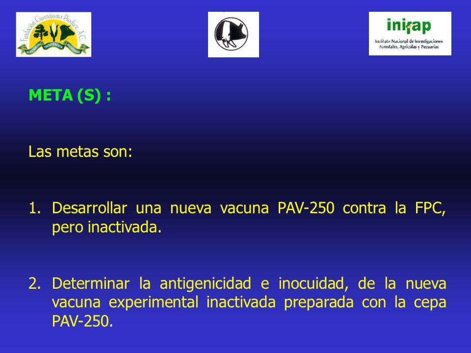 META (S) : Las metas son: Desarrollar una nueva vacuna PAV-250 contra la FPC, pero inactivada.