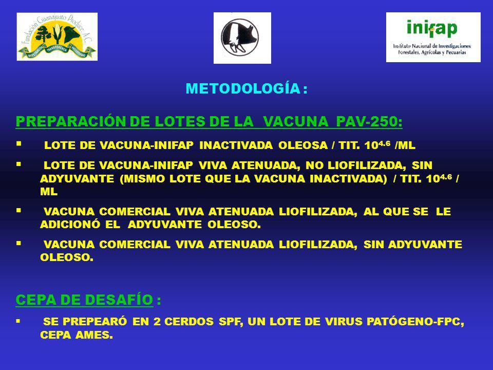 PREPARACIÓN DE LOTES DE LA VACUNA PAV-250: