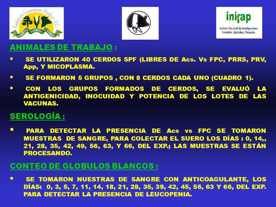 CONTEO DE GLOBULOS BLANCOS :