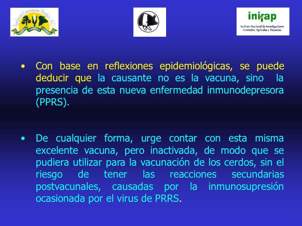 Con base en reflexiones epidemiológicas, se puede deducir que la causante no es la vacuna, sino la presencia de esta nueva enfermedad inmunodepresora (PPRS).
