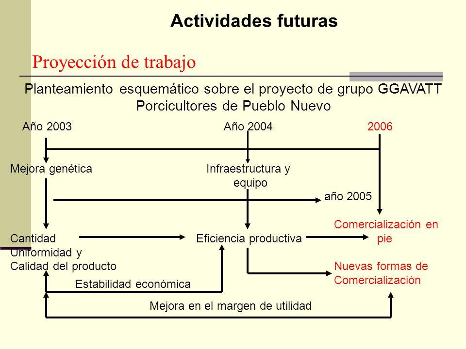 Proyección de trabajo Actividades futuras