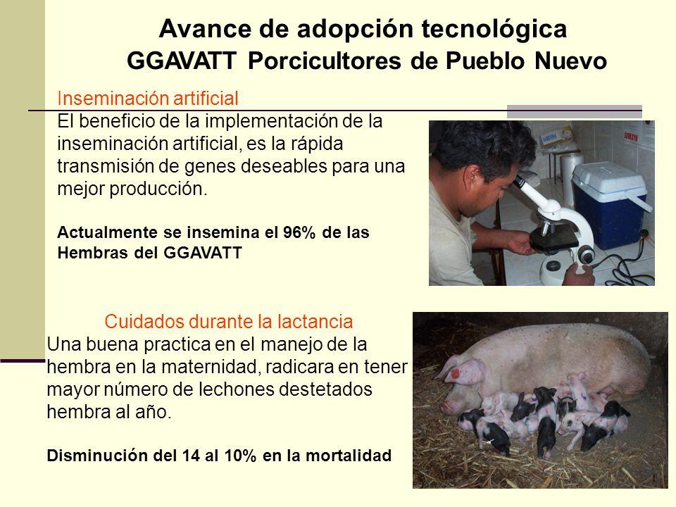 Avance de adopción tecnológica GGAVATT Porcicultores de Pueblo Nuevo
