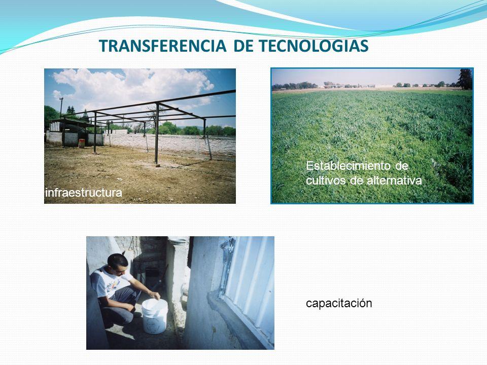 TRANSFERENCIA DE TECNOLOGIAS
