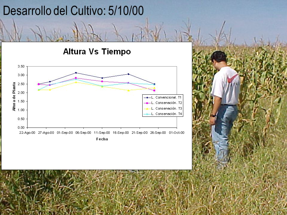Desarrollo del Cultivo: 5/10/00