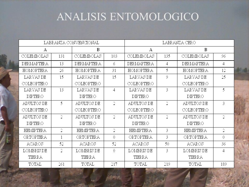 ANALISIS ENTOMOLOGICO