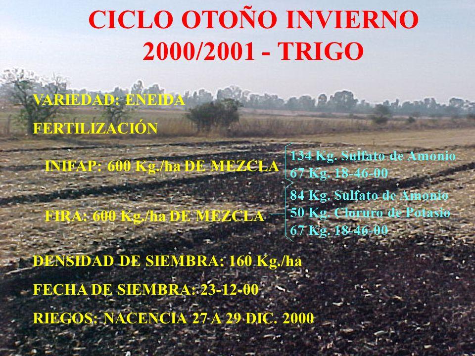 CICLO OTOÑO INVIERNO 2000/2001 - TRIGO