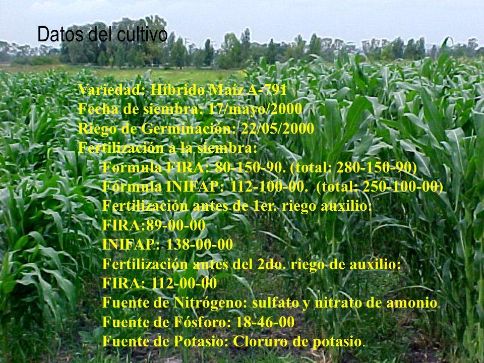 Datos del cultivo Variedad: Híbrido Maíz A-791