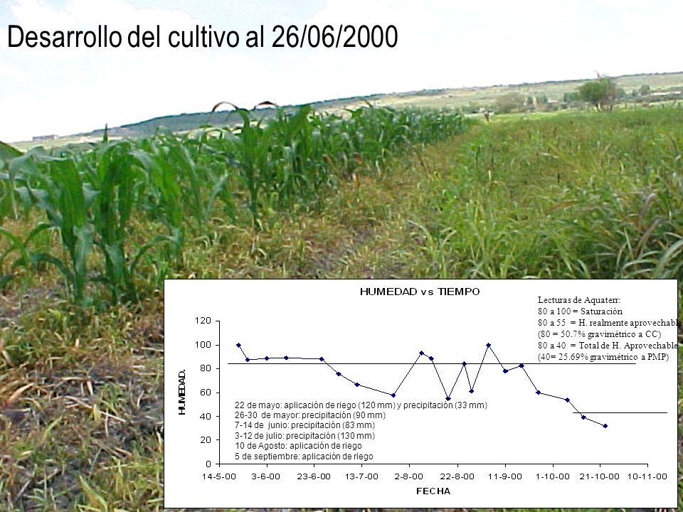Desarrollo del cultivo al 26/06/2000