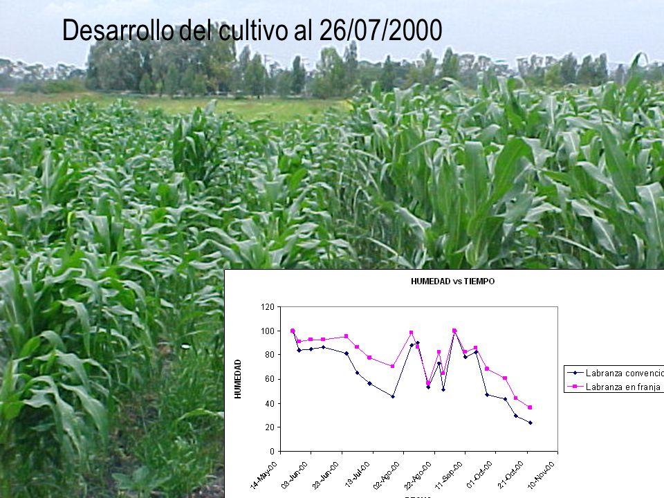 Desarrollo del cultivo al 26/07/2000