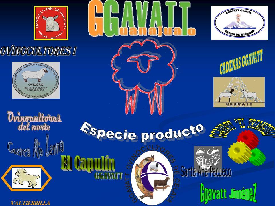 Ovinocultores I Ovinocultores Especie producto GGAVATT EL TRIANGULO
