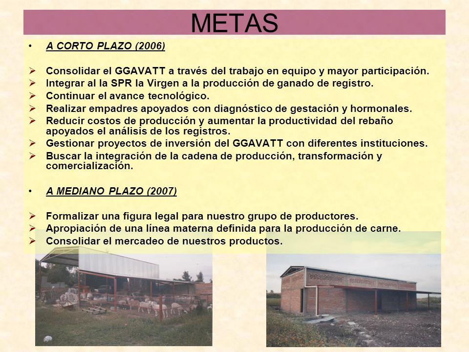 METAS A CORTO PLAZO (2006) Consolidar el GGAVATT a través del trabajo en equipo y mayor participación.