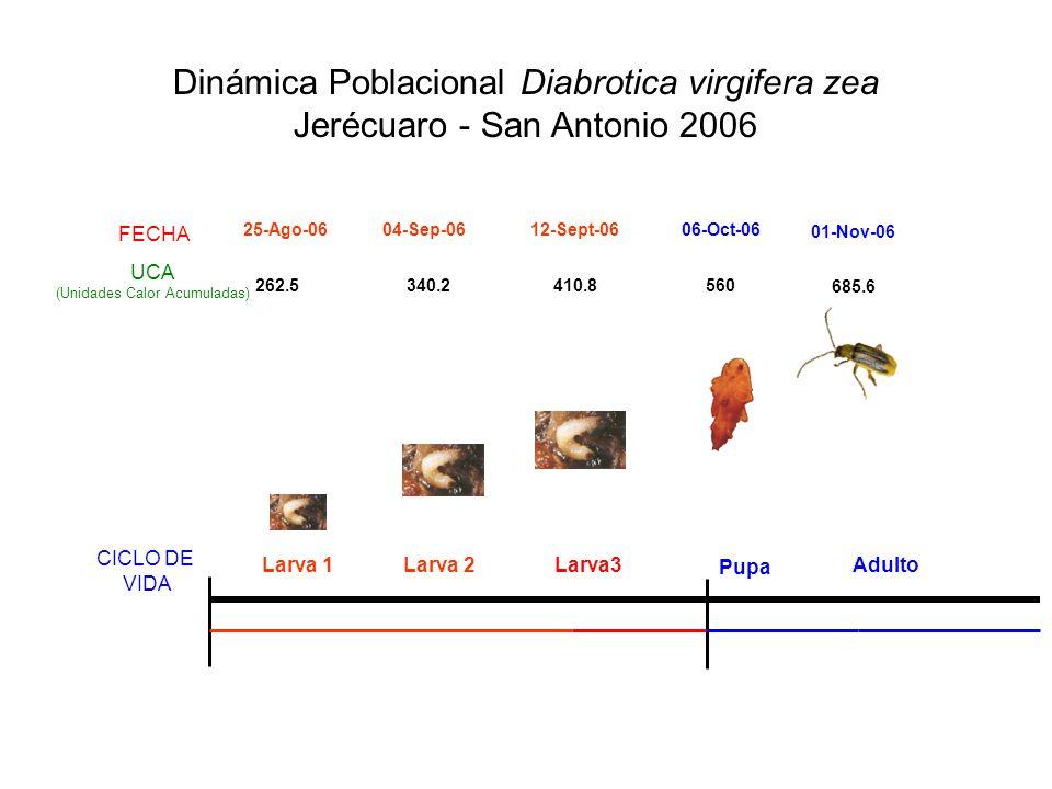 Dinámica Poblacional Diabrotica virgifera zea