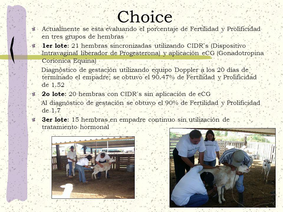 Choice Actualmente se esta evaluando el porcentaje de Fertilidad y Prolificidad en tres grupos de hembras.