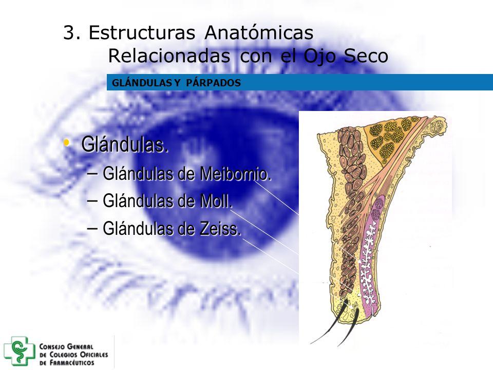 Glándulas. 3. Estructuras Anatómicas Relacionadas con el Ojo Seco