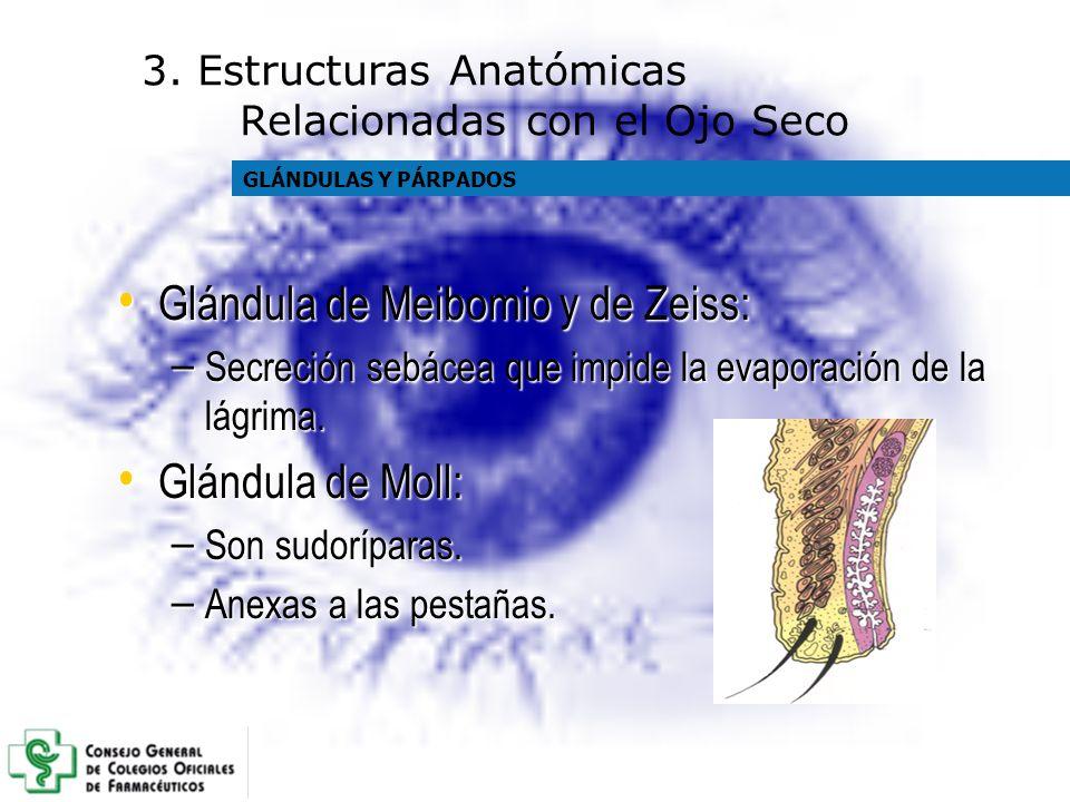 Glándula de Meibomio y de Zeiss: