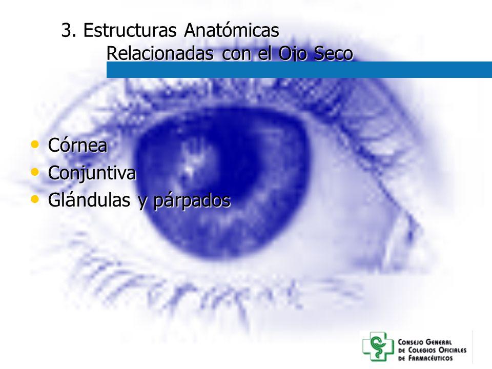 3. Estructuras Anatómicas Relacionadas con el Ojo Seco