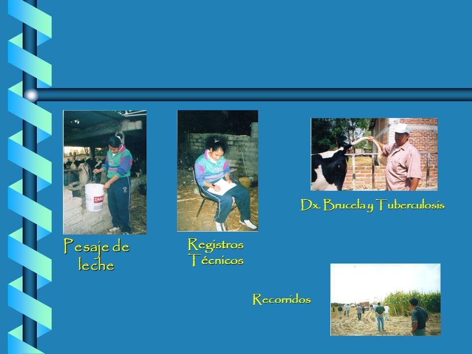RegistrosTécnicos Pesaje de leche Dx. Brucela y Tuberculosis